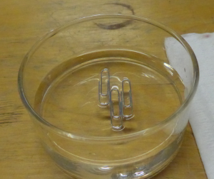 3 paperclips float on the surface of the water.